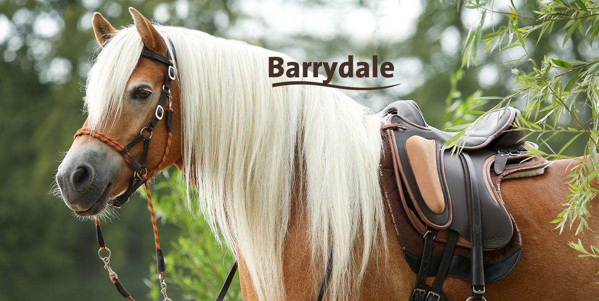 03_startbild_barrydale